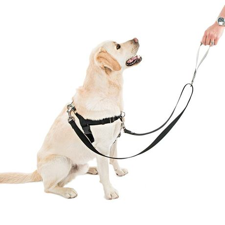 freedom no pull dog harness sitting