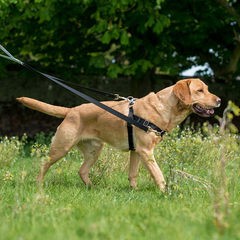freedom no pull dog harness walking